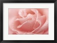 Framed Rose Dew