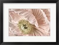 Framed Pink Poppy