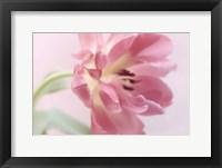 Framed Rosy Pink Tulip I