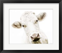 Framed Cow V