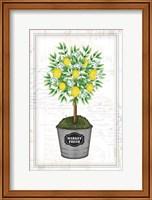 Framed Lemon Topiary