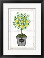 Framed Lemon Topiary