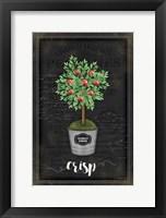 Framed Apple Topiary