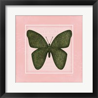 Framed Butterfly - Pink