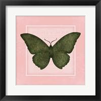 Framed Butterfly II - Pink