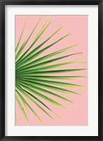 Framed Pink Palm III