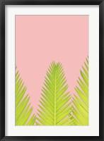 Framed Pink Palm IV