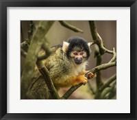 Framed Cute Monkey II