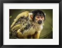 Framed Cute Monkey III