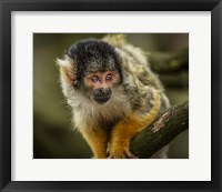 Framed Cute Monkey IIII