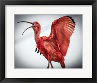 Framed Red Bird IIII