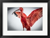 Framed Red Bird V