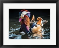 Framed Mandarin Duck