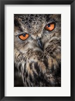 Framed Owl Close Up