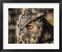 Framed Owl Close Up II