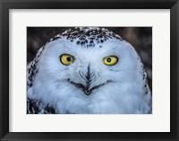 Framed Evil Owl