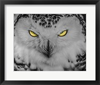 Framed Evil Owl II Black & White
