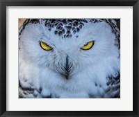 Framed Evil Owl II