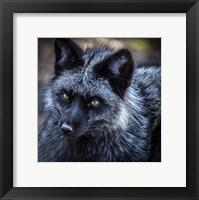 Framed Silver Fox