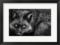 Framed Silver Fox II Black & White