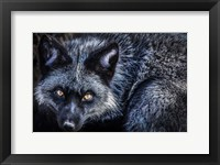 Framed Silver Fox II