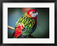 Framed Colorfull Bird