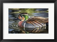 Framed Colorfull Duck
