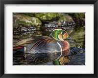 Framed Colorfull Duck II