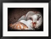Framed Screech Owl II