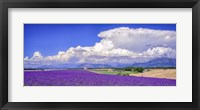 Framed Cloud Bank Over Lavender - Panorama