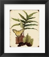 Framed Ferns On Vintage Tin - E