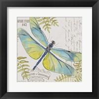 Framed Botanical Dragonfly D