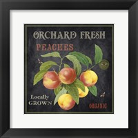 Orchard Fresh Peaches Framed Print