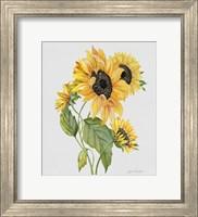 Framed Botanicals 8