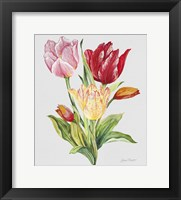 Framed Botanicals 9