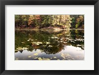 Framed Autumn Lakeside View Of Forest