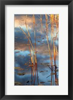 Framed Cattails At Dusk