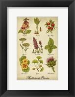 Framed Medicinal Plants