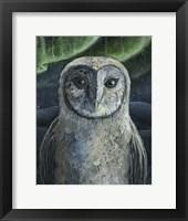 Framed Barn Owl II