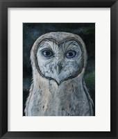 Framed Barn Owl III