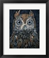 Framed Screech Owl