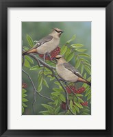 Framed Mountain Ash Waxwing