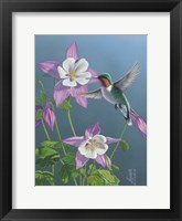 Framed Summer Hummingbird