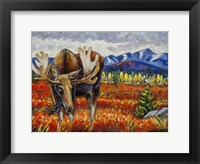 Framed Moose In The Autumn Tundra