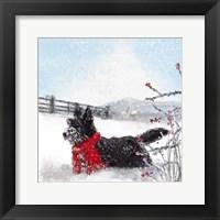 Framed Black Scottie Dog
