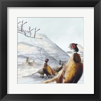 Framed Ring Necked Pheasant