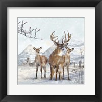 Framed Stag And Females
