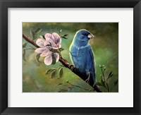 Framed Blue Finch