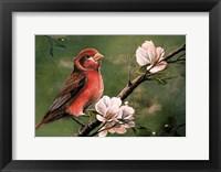 Framed Red Finch