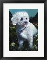 Framed Poodle